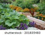 Vegetable And Flower Garden In...
