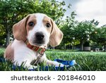 Stock photo dog 201846010