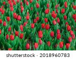Spring Background With Red...