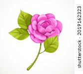 pink rose isolated on a white... | Shutterstock .eps vector #2019162323