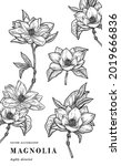 hand drawn floral botany... | Shutterstock .eps vector #2019666836