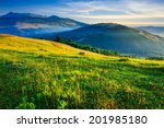 cold fog on meadow with grass and flowers in the mountains near the forest - stock photo