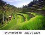 Terrace Rice Fields In...