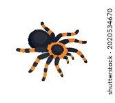 Black And Orange Tarantula...