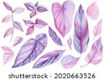 Set Of Tropical Leaves Of Pink...