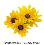 Bouquet Of Black Eyed Susan