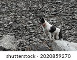 The Dog Stands On A Rock. The...