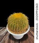 Echinocactus Grusonii With...