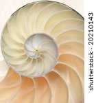 Chambered Nautilus shell cutaway close-up - stock photo