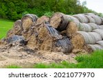 Rolled Up Hay Bales Wrapped In...