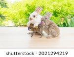 Easter Holiday Bunny Animal And ...