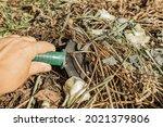 Hands In Protective Gardening...