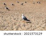 Several Seagulls Stand Among...