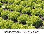 salad field | Shutterstock . vector #202175524