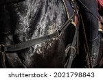 Close Up Black Horse Covered...
