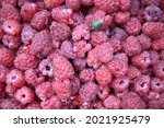 Small photo of Macro of raspberries harvest with stink bug, can be used as a background. Flatlay from a large number of raspberries with stink bug. Stink bug on a natural berry background. Fresh ripe and juicy