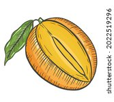 mango is a single isolated... | Shutterstock .eps vector #2022519296