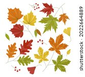 autumn leaves collection.... | Shutterstock .eps vector #2022664889