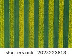 Yellow Green Stripes In A Field ...