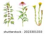 Watercolor Medicinal Herb Set ...