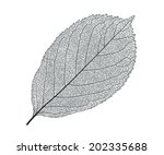 leaf isolated detailed vector... | Shutterstock .eps vector #202335688