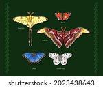 butterflies with their latin... | Shutterstock .eps vector #2023438643