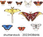 butterflies with their latin... | Shutterstock .eps vector #2023438646