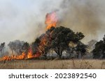 A Tree Devoured By Flames....