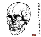 Sketch Of Human Scull. Hand...