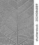 distressed overlay wooden leaf... | Shutterstock .eps vector #2024086889