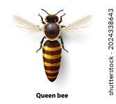 realistic bee queen mother.... | Shutterstock .eps vector #2024338643