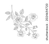 hand drawn rose floral... | Shutterstock .eps vector #2024654720