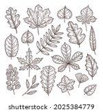 sketch autumn leaves. autumn... | Shutterstock .eps vector #2025384779