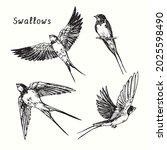 hand drawn swallow bird flying...   Shutterstock .eps vector #2025598490