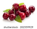 ripe cherries isolated on white ... | Shutterstock . vector #202559929