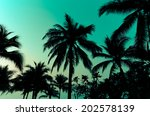 palm trees on the beautiful...   Shutterstock . vector #202578139