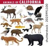 Vector Set   Animals Of...