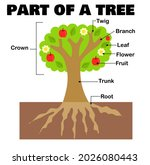 part of a tree or plant for... | Shutterstock .eps vector #2026080443