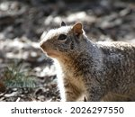 Picture Of A Wild Squirrel