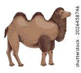 bactrian camel on white...   Shutterstock .eps vector #2026458746