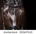 Stock photo dressage horse eye in dark 202647610