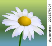 marguerite flower closeup macro ... | Shutterstock .eps vector #2026579109
