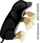 cartoon mole isolated on white...   Shutterstock .eps vector #2027120690