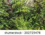 rain in tropical rainforest | Shutterstock . vector #202725478