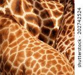 Giraffe Fur