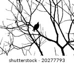 vector silhouette starling on tree - stock vector