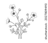 hand drawn buttercup floral...   Shutterstock .eps vector #2027809493
