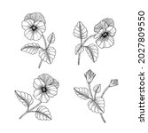 hand drawn pansy floral... | Shutterstock .eps vector #2027809550
