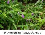 Summer Flowering Purple Flowers ...