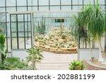 Cactus Glasshouse Plant...